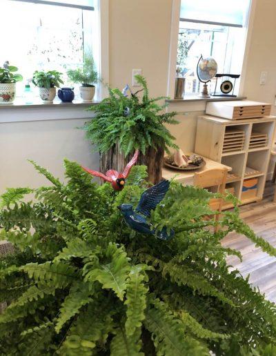Montessori plants in class